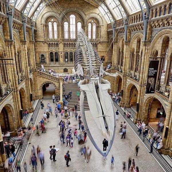 attrazioni piu economiche da visitare a Londra - natural history museum