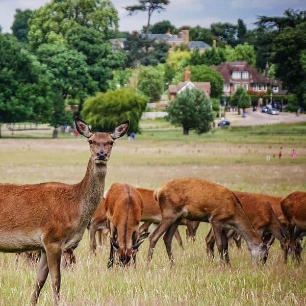 attrazioni piu economiche da visitare a Londra - richmond-park